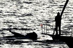 近距離觀鯨